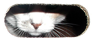 Ragnar in comic box closeup