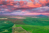 Palouse Reds - Palouse Hills, Washington