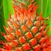 Pineapple flurosence by shanzz ©