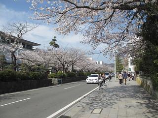鎌倉ファミリーポタリング2013/3/28