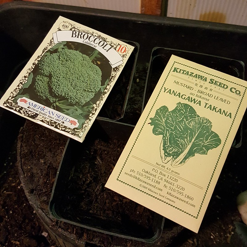 Broccoli and Mustard Sown