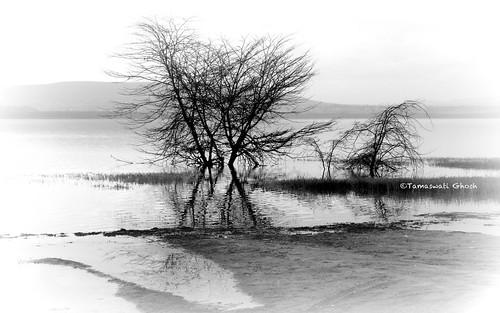 africa trees blackandwhite nature landscape nikon kenya valley nakuru rift lakenakuru d5100 mygearandme blinkagain