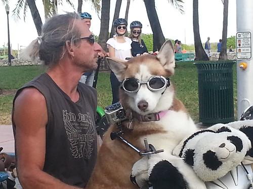 A Man and his Dog by Lisa's Random Photos
