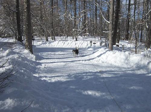 雪掻きが終わったアプローチ 2013年1月15日11:19 by Poran111