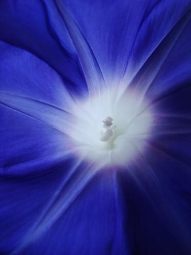 蒼 Blue