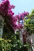 Kreta 2009-1 207