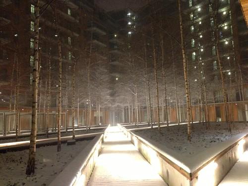 Snowy Hofdame