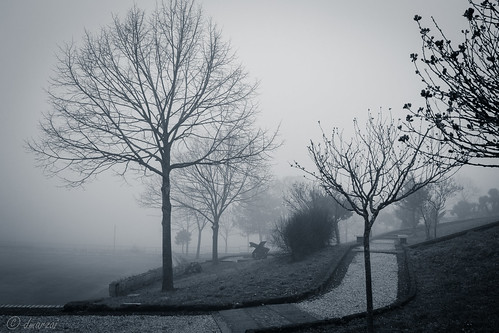 trees winter blackandwhite bw cold nature fog landscape nikon italia campania bestcapturesaoi mignanomontelungo elitegalleryaoi photographyforrecreation nikond3100 dmarzai photographyforrecreationclassic