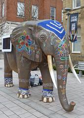 Campus elephant