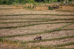 Mai Chau, Hoa Binh province