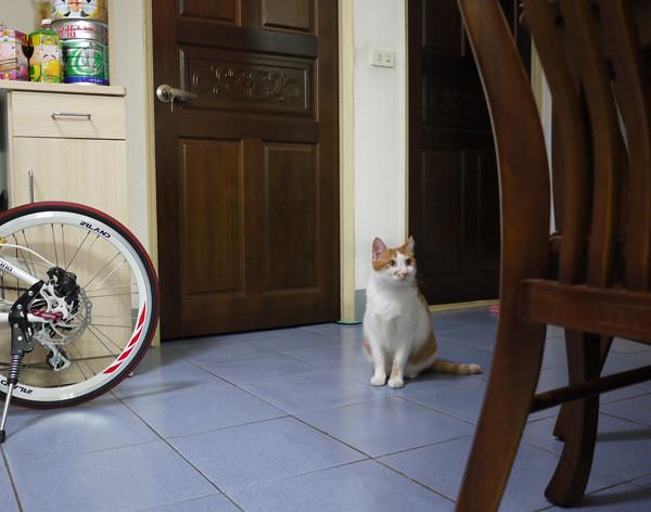 2其實他早就會開門了,只是我每次跟拍時都被發現,因為我這個狗仔對他來說太明顯了!
