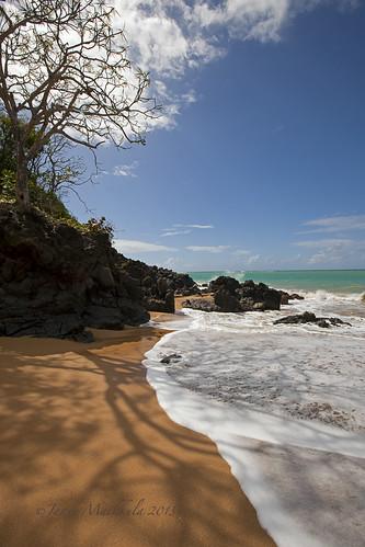 shadow sea sun tree beach nature sand shadows kallio puu meri luontokuva guadeloupe luonto ranta aurinko deshaies varjo varjot uimaranta kivet caribbeanislands hiekka hiekkaranta rantakallio rantaviiva ikithule karibiansaaret