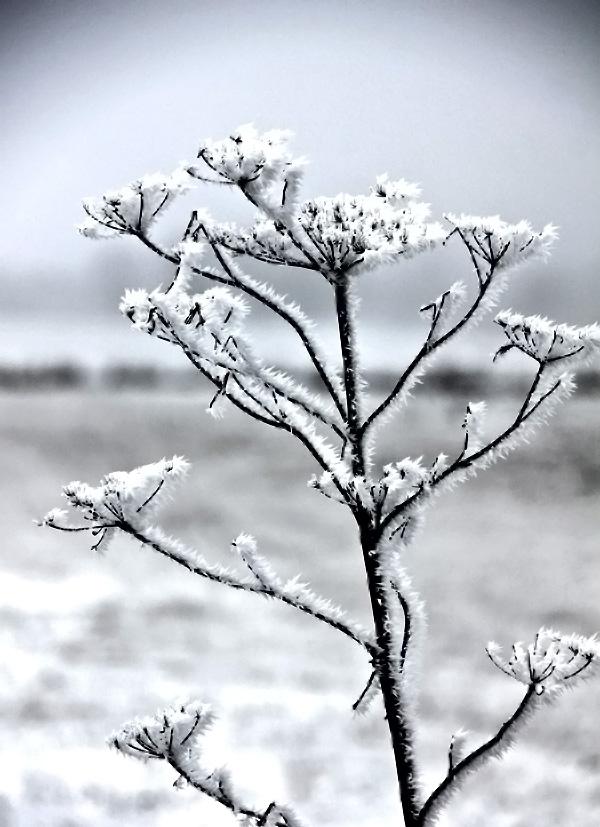 Vinterdag-5