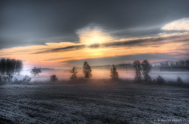 dawn frosty