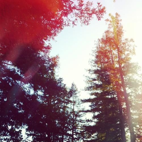 Nature pics