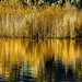 Golden reflection.. [Explored] by Murtaza Mahmud [Thank you for 450k+ views]