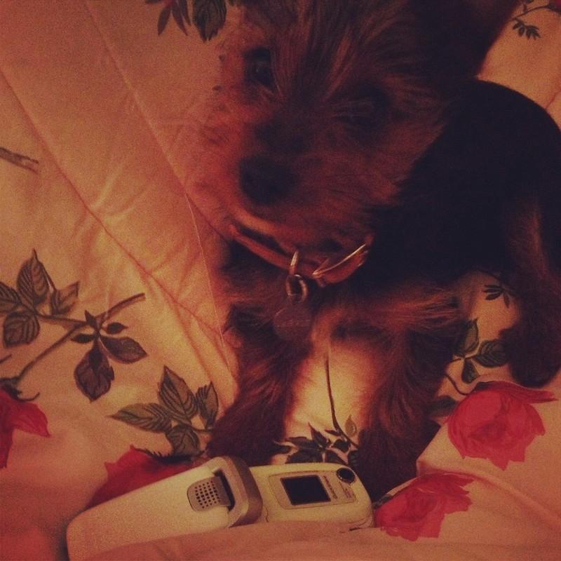 puppy phone