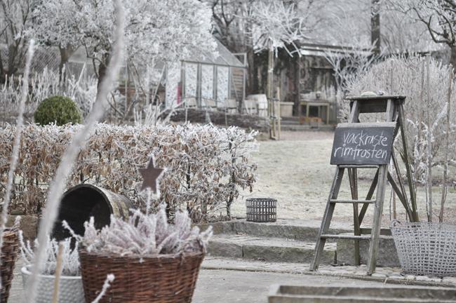 wintergarden 6