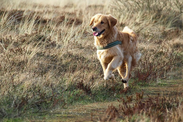 a dog running outdoors