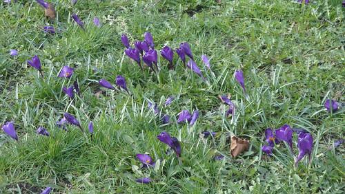 spring at standard 35 width=