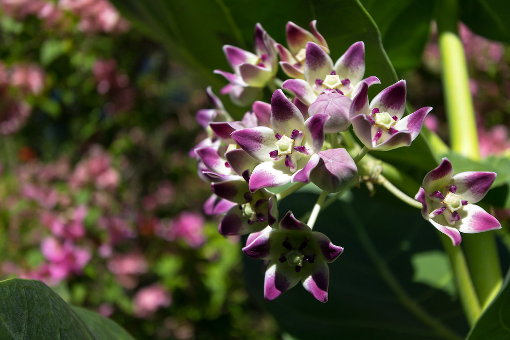 Flowers @ Annaberg
