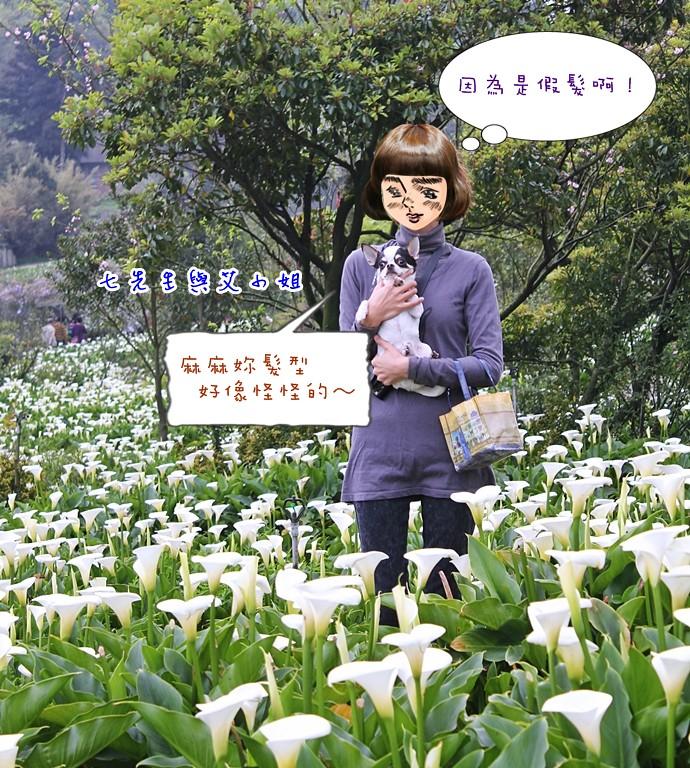 14 苗榜海芋園