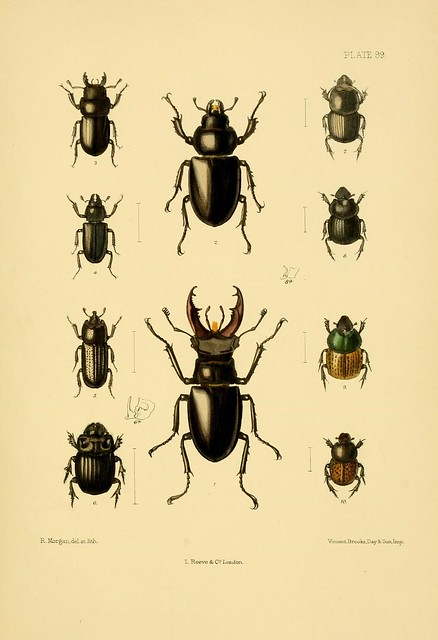 The Coleoptera of the British islands : a descriptive account of the families, genera, and species indigenous to Great Britain and Ireland, with notes as to localities, habitats, etc. v.4 (1890)