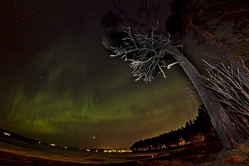 trees sweden flash jämtland auroraborealis östersund norrsken northernlight storsjön canoneos50d samyang8mm magnuslögdberg