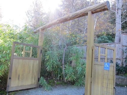 Hakone Japanese Gardens, Saratoga, CA, bamboo IMG_2271