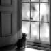 Watching, Waiting... by Lauren Thea