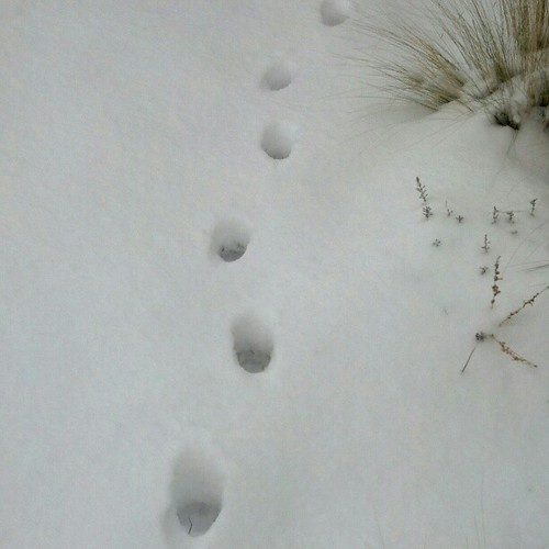 Tracks in the snow. #FMSPHOTOADAY something beginning with T.