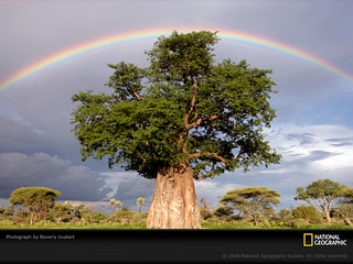 rainbow-baobab-tree-joubert-1011931-sw
