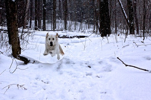 Leaping in a Winter Wonderland