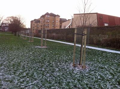 Pilrig Park Tree Planting