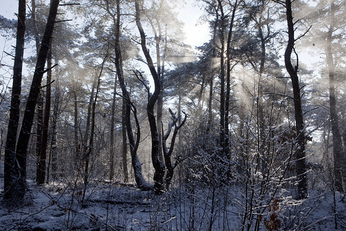 sneeuwwind