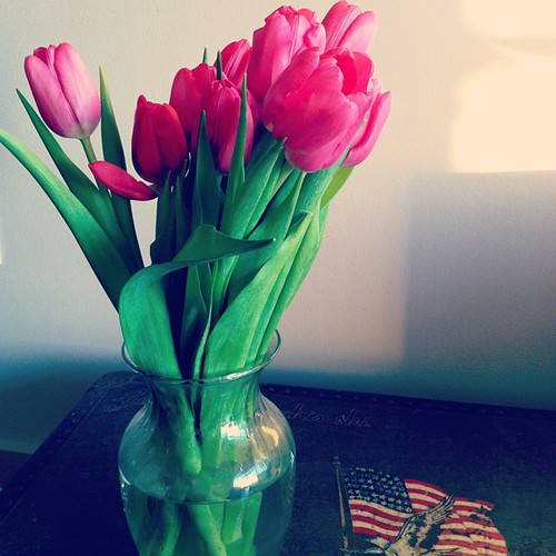 @hoover11 knows I prefer tulips over roses