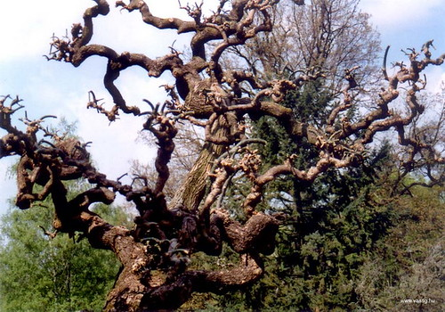 weird_trees23