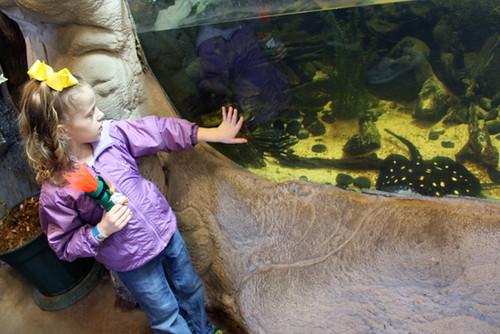 Aquarium_Aut-Looking-at-Eels