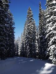 木, 2013-02-28 09:37 - スノーシューとノルディックのコース