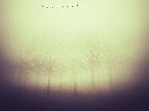 [フリー画像素材] 自然風景, 樹木, 鳥類 (その他) ID:201303210600