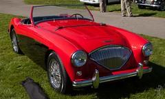 automobile, vehicle, austin-healey 100, antique car, classic car, vintage car, land vehicle, convertible, sports car,