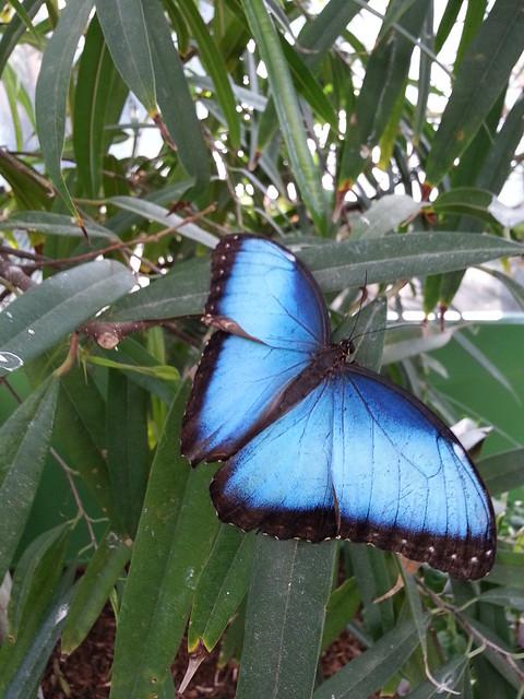 Butterfly San Diego Zoo Safari Park Butterflyjungle