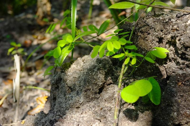 Mangrove 16