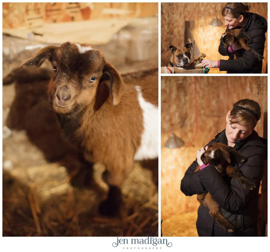 goats-8
