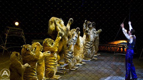 All the big cats