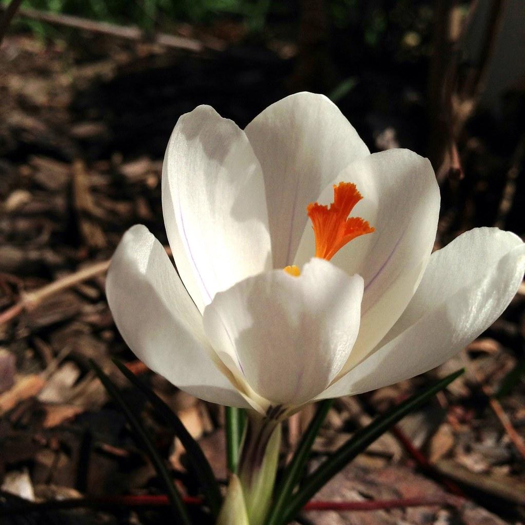 It feels like spring., 8594893055 461a3b52d7 b