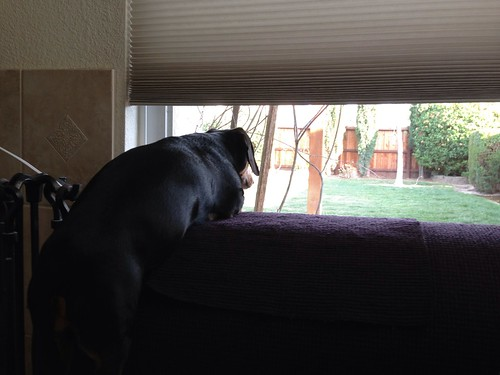looking out the window...