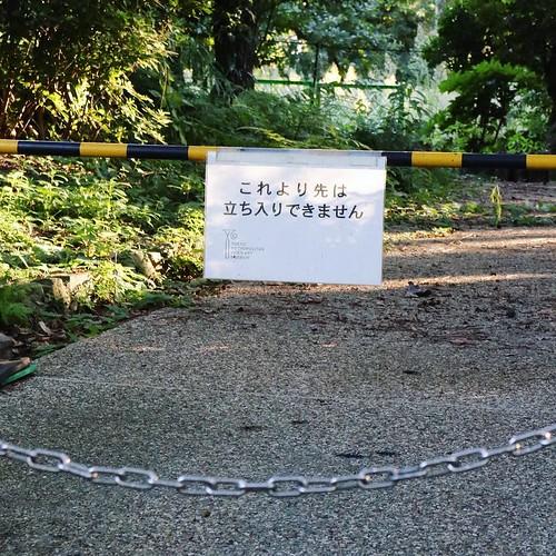 工事中が多かった。 #東京都庭園美術館