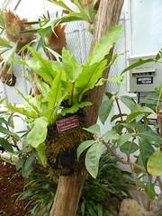 Planting Fields Arboretum - Main Greenhouse