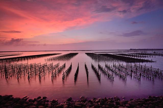 Oyster field , 東石漁港